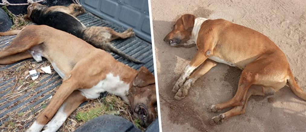 Κτηνωδία: έριξαν φόλες σε σκυλιά, δίπλα από παιδική χαρά (εικόνες)
