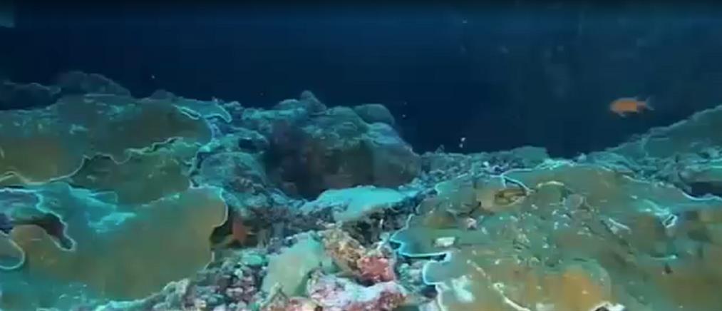 Εντοπίστηκαν νέα είδη ψαριών και θαλάσσιων οργανισμών (βίντεο)
