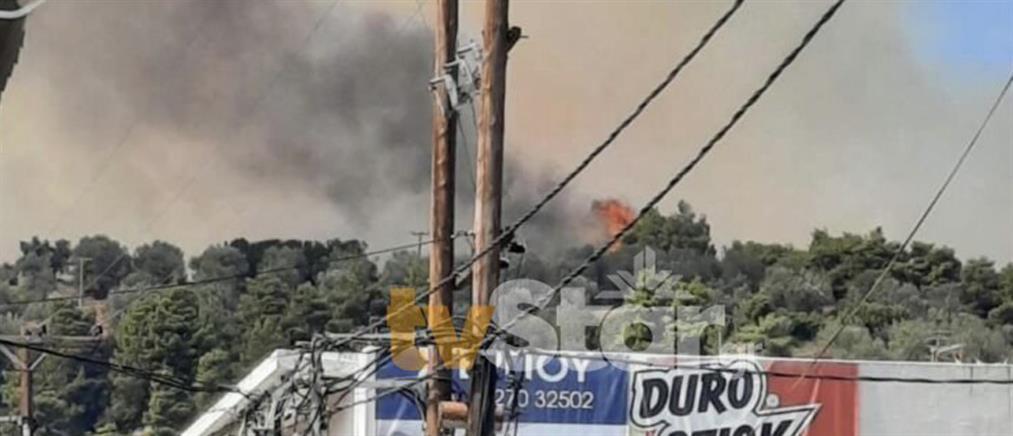 Εύβοια: Φωτιά στη Λίμνη (εικόνες)