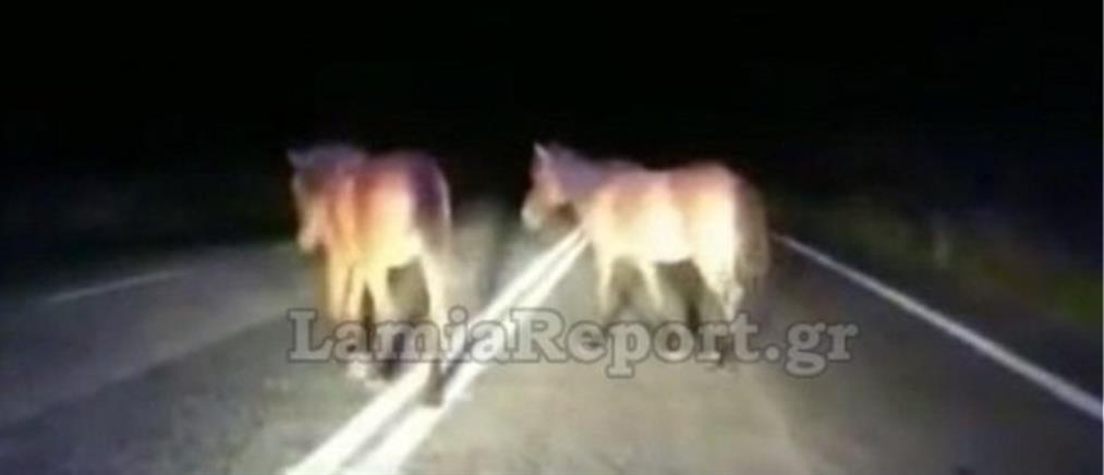 """Οδηγοί """"πέφτουν"""" πάνω σε άλογα στην μέση του δρόμου (βίντεο)"""