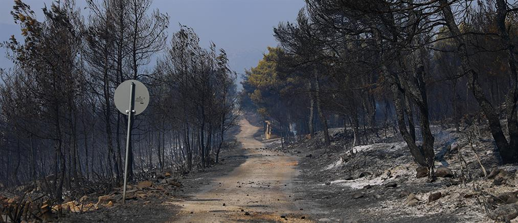 Φωτιά στα Βίλια: Πάνω από 94000 στρέμματα η καμένη γη