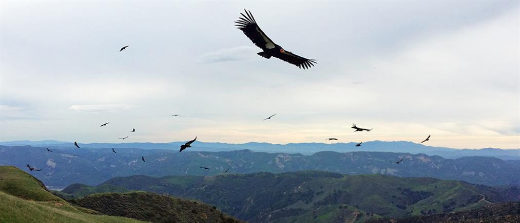 Όσο μακρύτερα μεταναστεύει ένα πουλί τόσο εξυπνότερο είναι