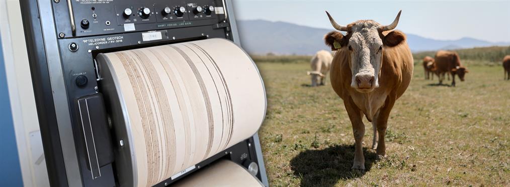 Τα ζώα, η έκτη αίσθηση και η πρόβλεψη των σεισμών