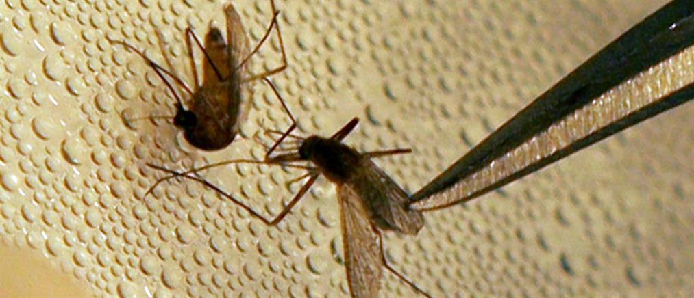 Πατούλης για τον ιό του Δυτικού Νείλου: να θωρακίσουμε την Αττική