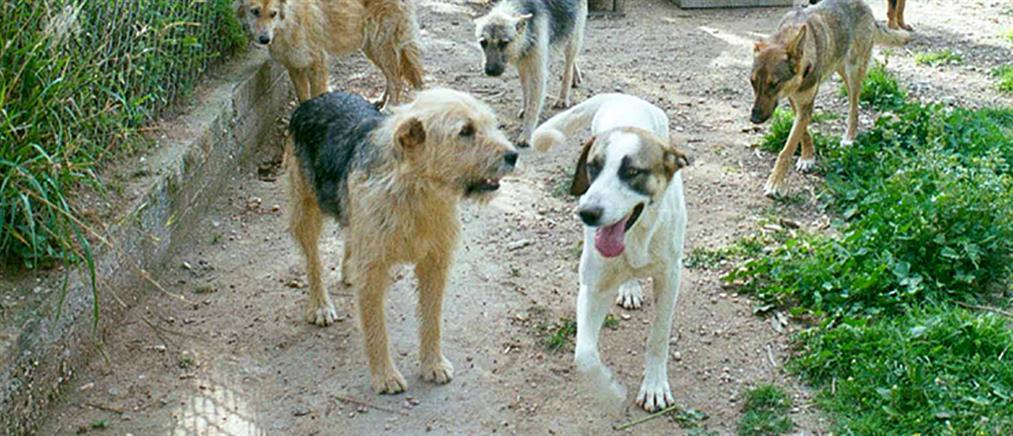 Σκυλιά έπαθαν ηλεκτροπληξία