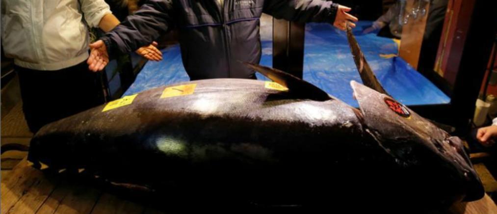 Τιμή-ρεκόρ σε δημοπρασία για έναν τόνο 278 κιλών
