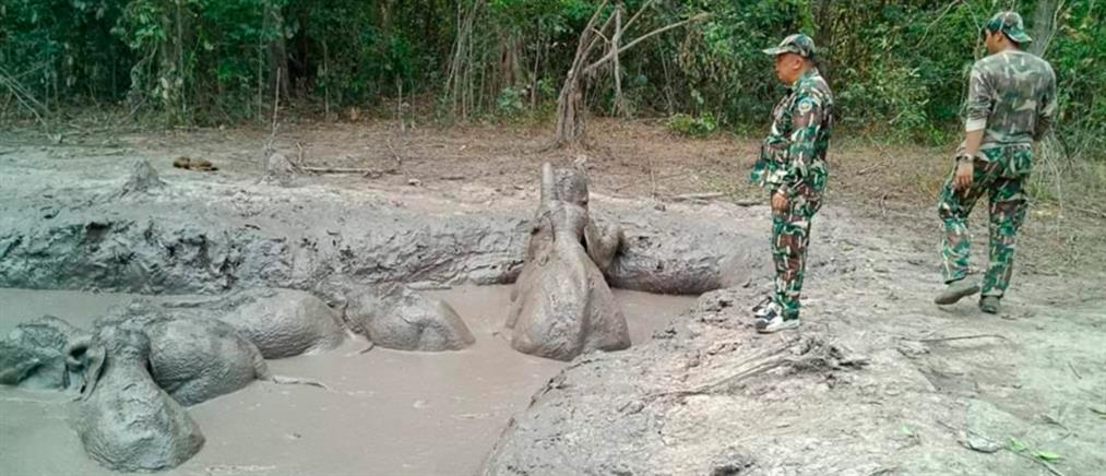 Ελεφαντάκια παγιδεύτηκαν σε βαθύ λάκκο με λάσπη (βίντεο)
