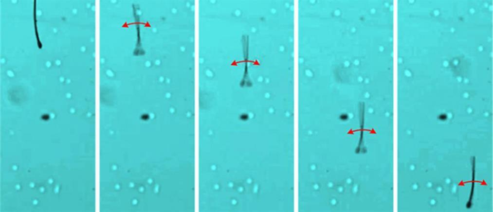 Ρομπότ σε σχήμα σπερματοζωαρίου φέρνει επανάσταση στη λήψη φαρμάκων