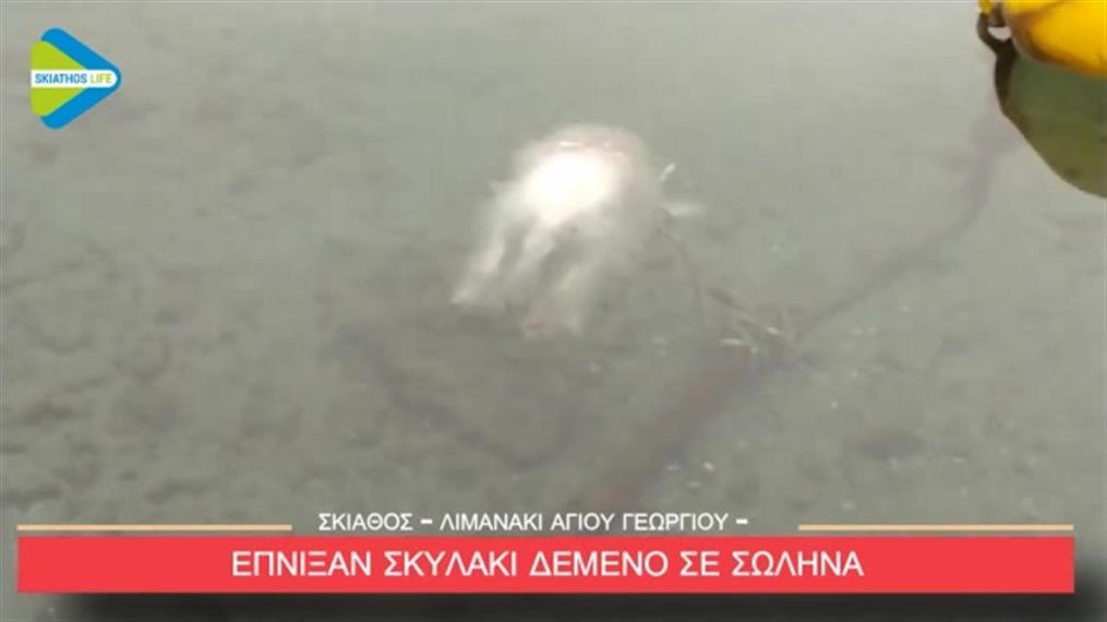Έδεσαν σκυλάκι σε σωλήνα και το έπνιξαν στη Σκιάθο