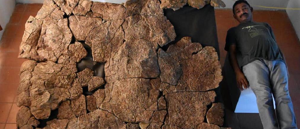 Ανακαλύφθηκαν απολιθώματα χελώνας σε μέγεθος αυτοκινήτου!