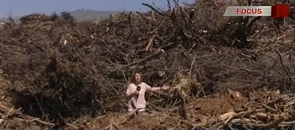 """""""Κραυγή αγωνίας"""" κατοίκων στο Μάτι για οικόπεδο-""""βόμβα"""" γεμάτο ξύλα και κλαδιά (βίντεο)"""