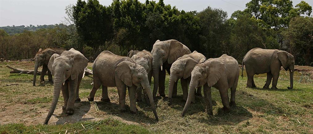 Η κυβέρνηση που πουλά άγρια ζώα για να σωθούν από την κλιματική αλλαγή