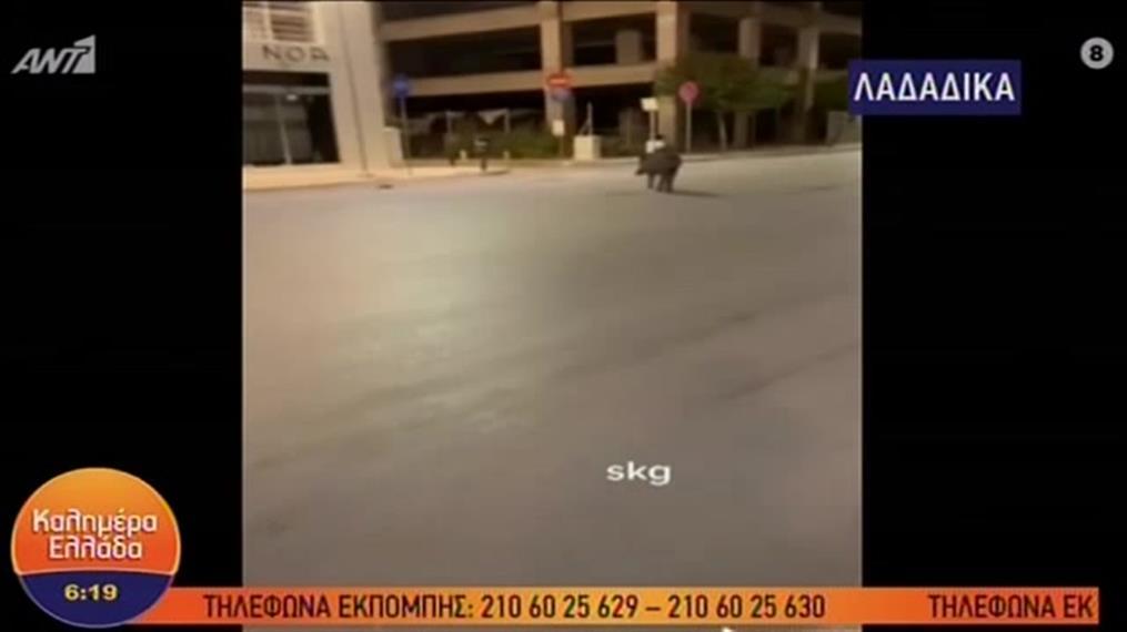 Θεσσαλονίκη: Αγριογούρουνα έκαναν βόλτα στα... Λαδάδικα