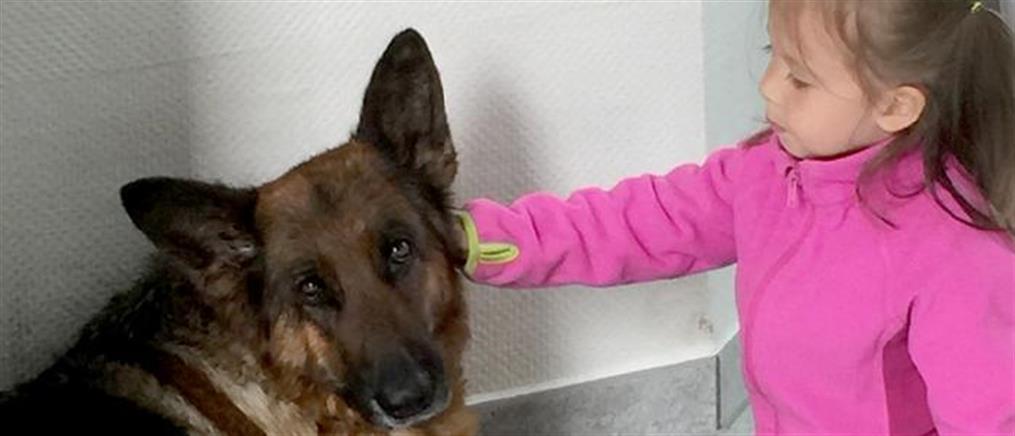 Σκυλίτσα χάθηκε στη Γερμανία και βρέθηκε στην... Ελβετία!