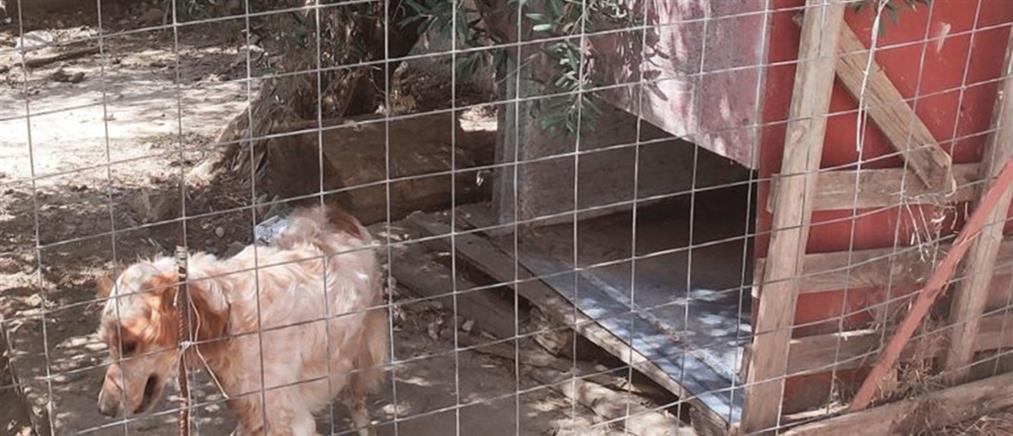 Χανιά: Στα κρατητήρια μητέρα δύο ανήλικων παιδιών για ένα… σκυλόσπιτο (εικόνες)