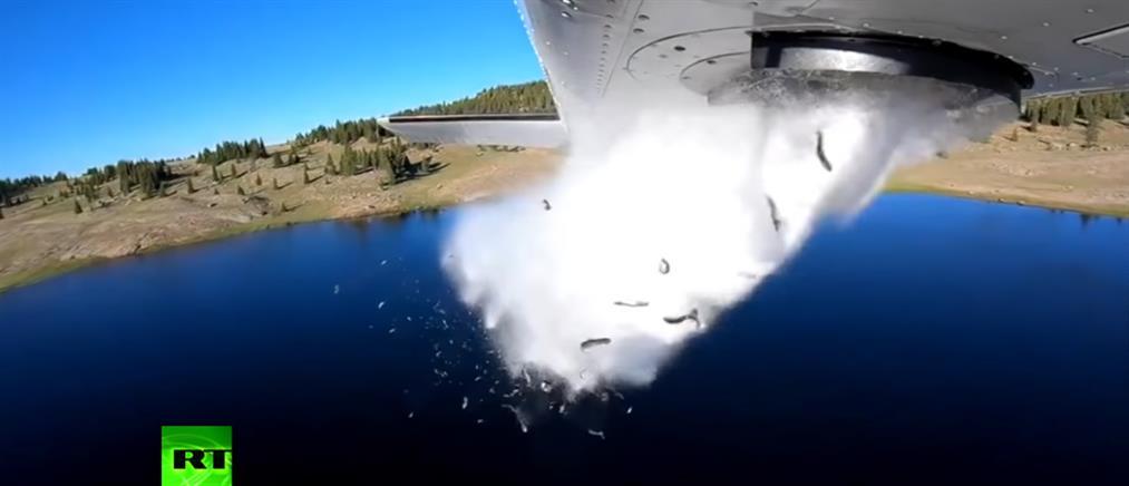 """Εντυπωσιακό βίντεο: """"έβρεξε""""... πέστροφες σε λίμνη"""