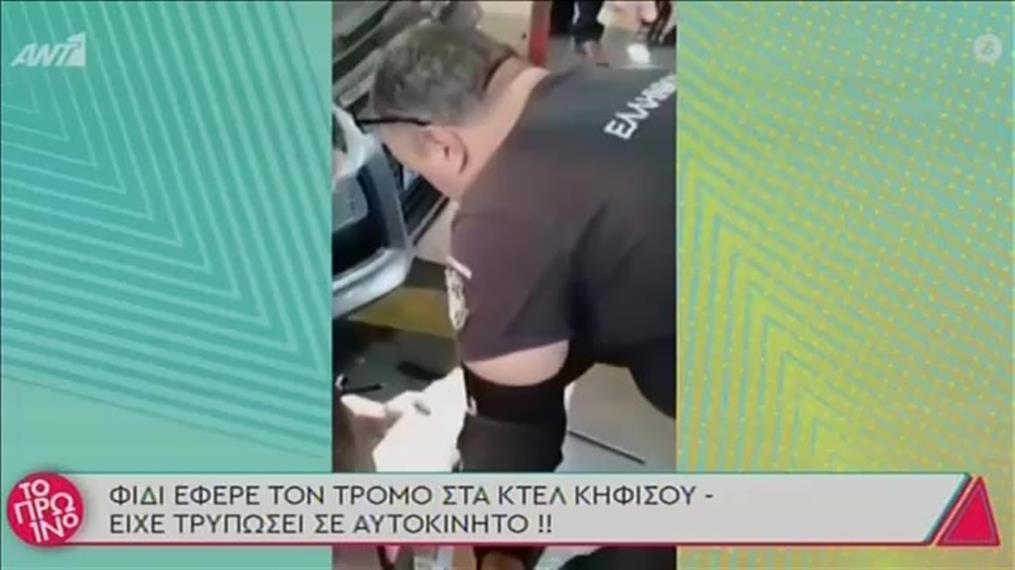 Φίδι τρύπωσε σε αμάξι στα ΚΤΕΛ Κηφισού