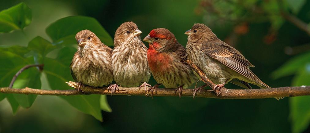 Πάνω από 400 εκατομμύρια πτηνά εξαφανίστηκαν από την ευρωπαϊκή πανίδα