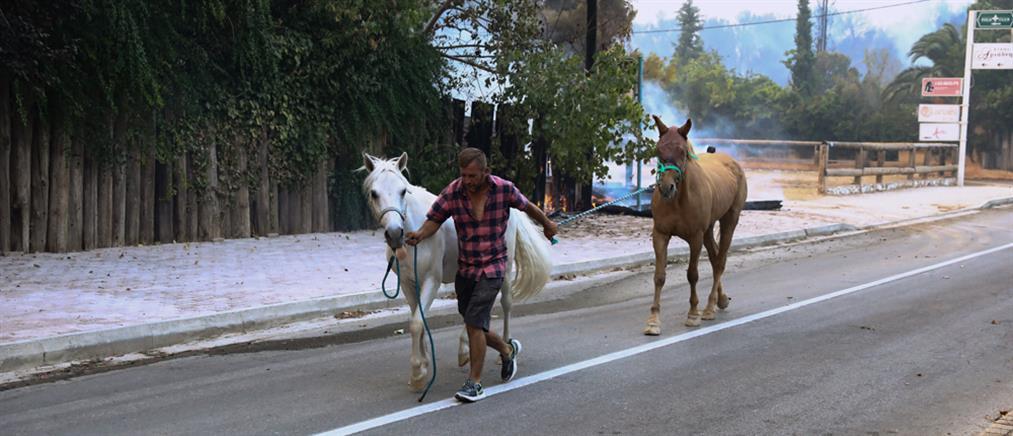 Φωτιά στη Βαρυμπόμπη: Απομακρύνθηκαν τα άλογα (εικόνες)