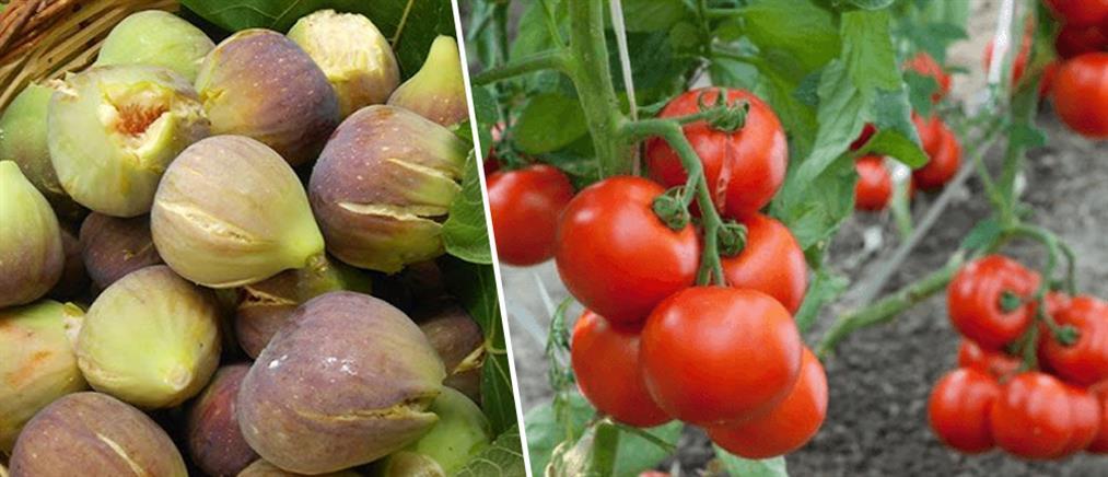 Τα ευεργετικά οφέλη του σύκου και της ντομάτας