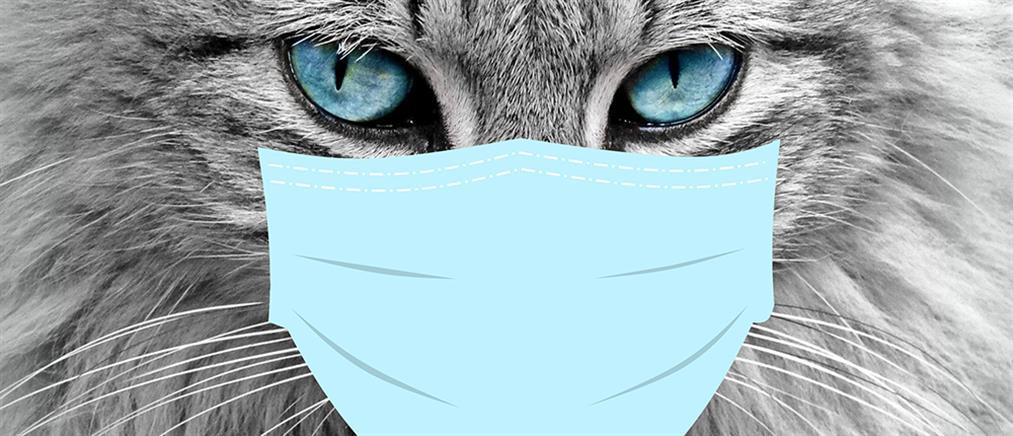 Carnivac-Cov: Πρώτο εμβόλιο κατά του κορονοϊού για ζώα