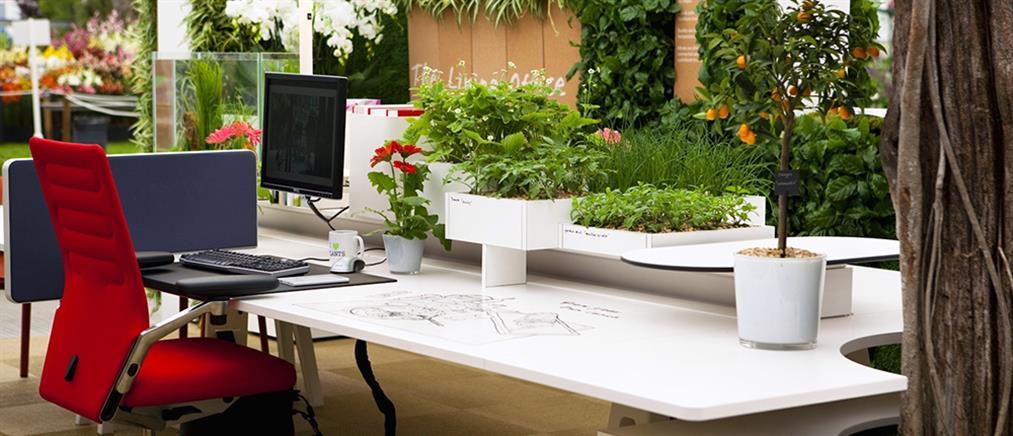 Τα «πράσινα» γραφεία αυξάνουν την παραγωγικότητα
