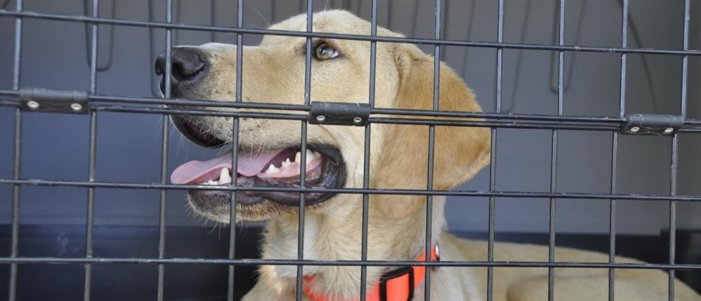 Φυλάκιση ενός χρόνου για κακοποίηση σκύλου