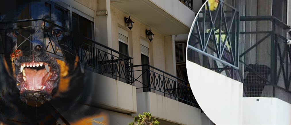 Σοκάρει η έκθεση του ιατροδικαστή για το βρέφος που κατασπάραξε το ροτβάιλερ