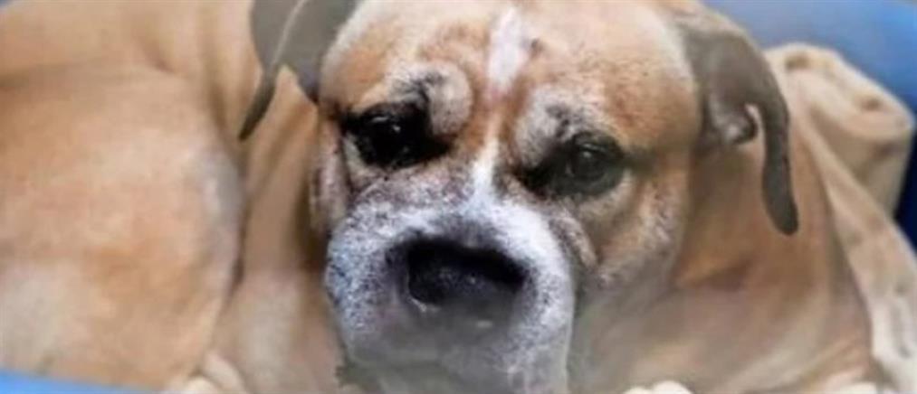 Πυροβόλησαν και σκότωσαν αδέσποτο σκυλί!