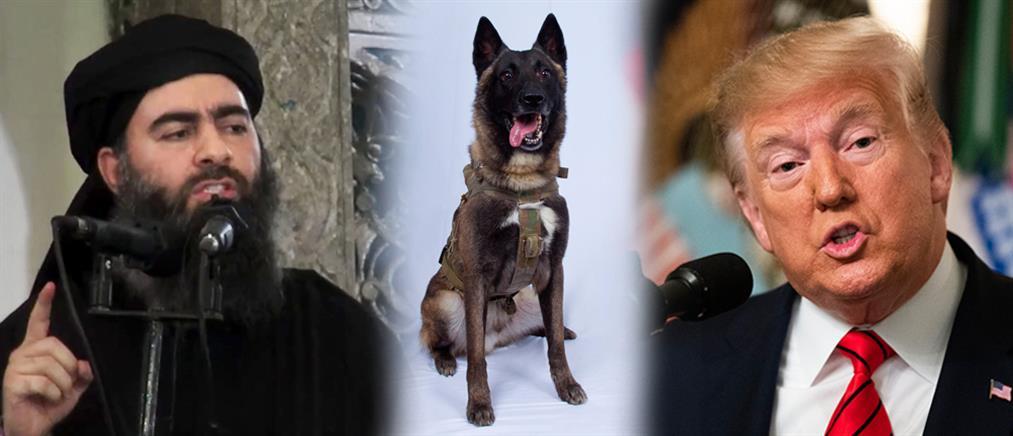 """Ο σκύλος """"ήρωας"""" που εξουδετέρωσε τον Μπαγκντάντι (εικόνες)"""