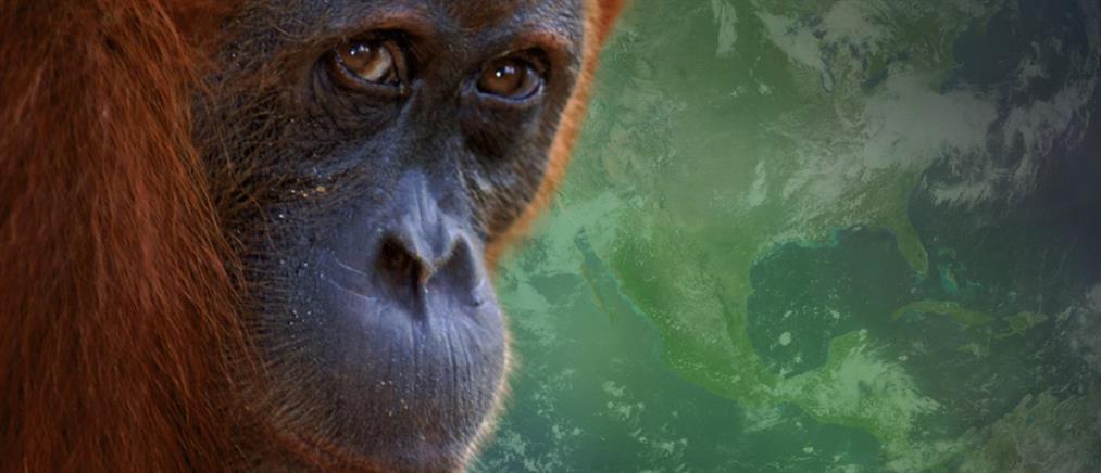 WWF: Σε κατάσταση εμφράγματος ο πλανήτης