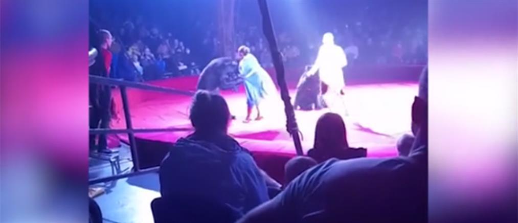 Τρόμος σε τσίρκο στη Ρωσία: Αρκούδα επιτέθηκε σε έγκυο θηριοδαμαστή (βίντεο)