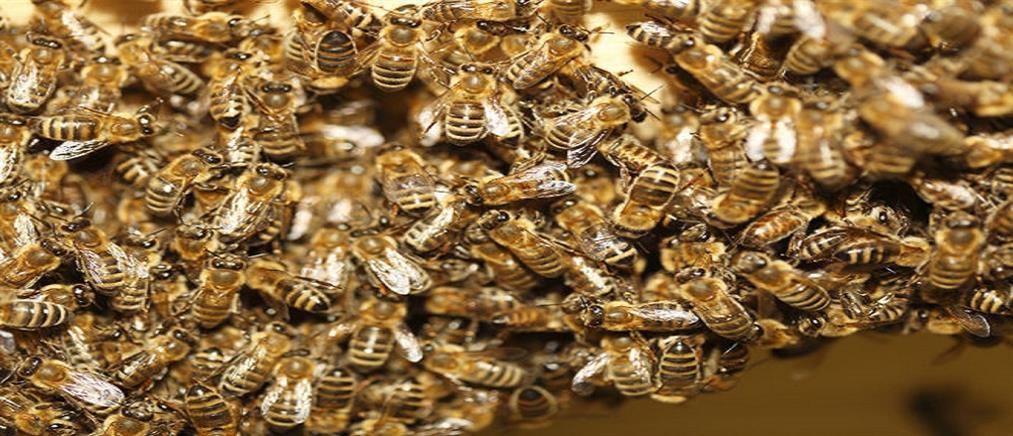 Τον τσίμπησαν δεκάδες χιλιάδες μέλισσες και… επέζησε!