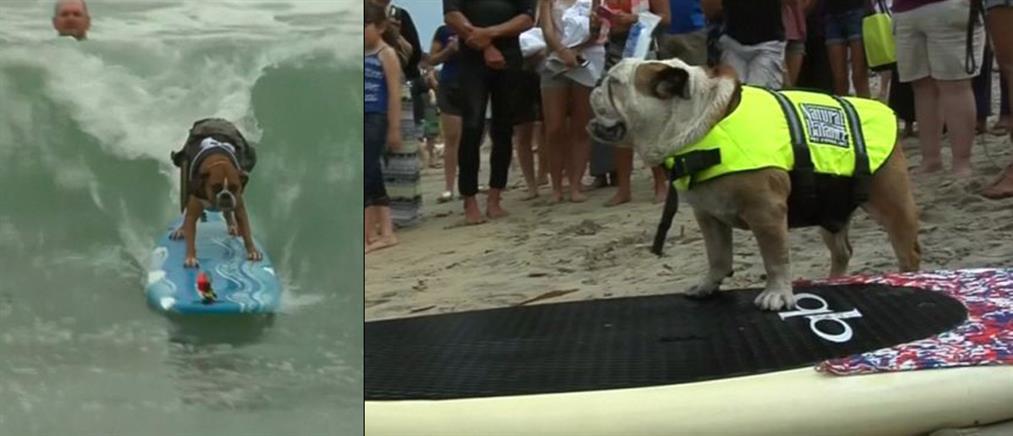 Σκυλιά κάνουν surfing στην Καλιφόρνια