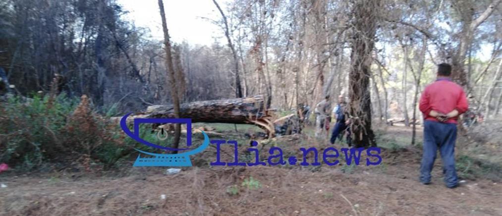Γυναίκα καταπλακώθηκε από δέντρο και σκοτώθηκε (εικόνες)