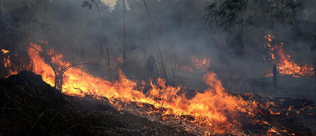 Οι φλόγες συνεχίζουν το καταστροφικό τους έργο στον Αμαζόνιο (βίντεο)
