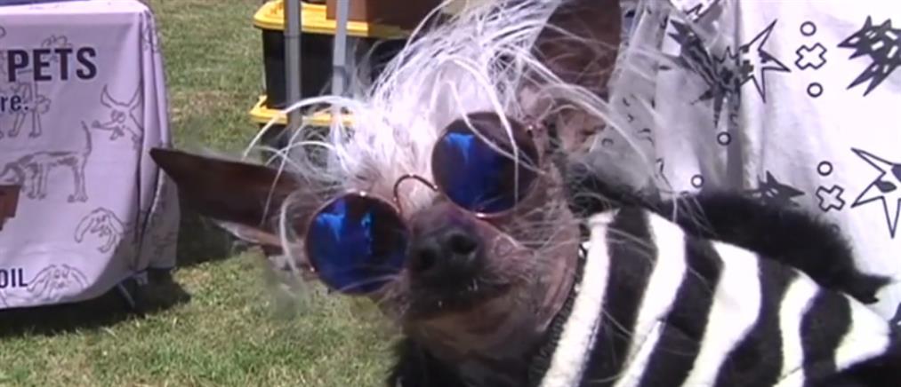Καλλιστεία για το πιο άσχημο σκυλί του κόσμου (βίντεο)