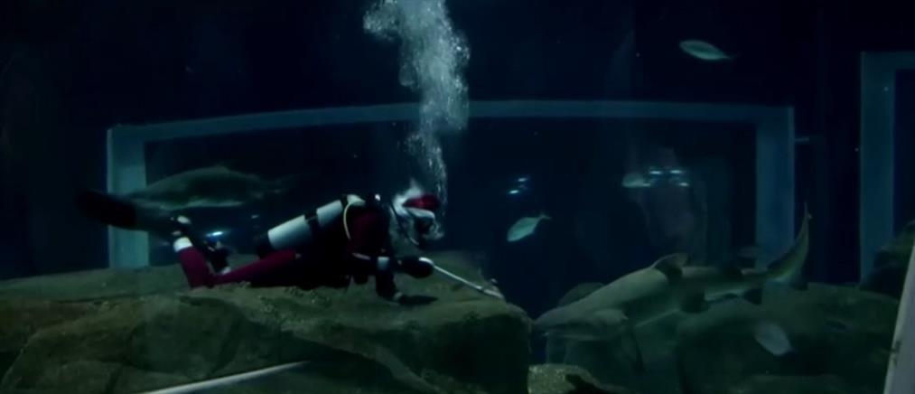 Υποβρύχιος Άγιος Βασίλης παρέα με... καρχαρίες (βίντεο)