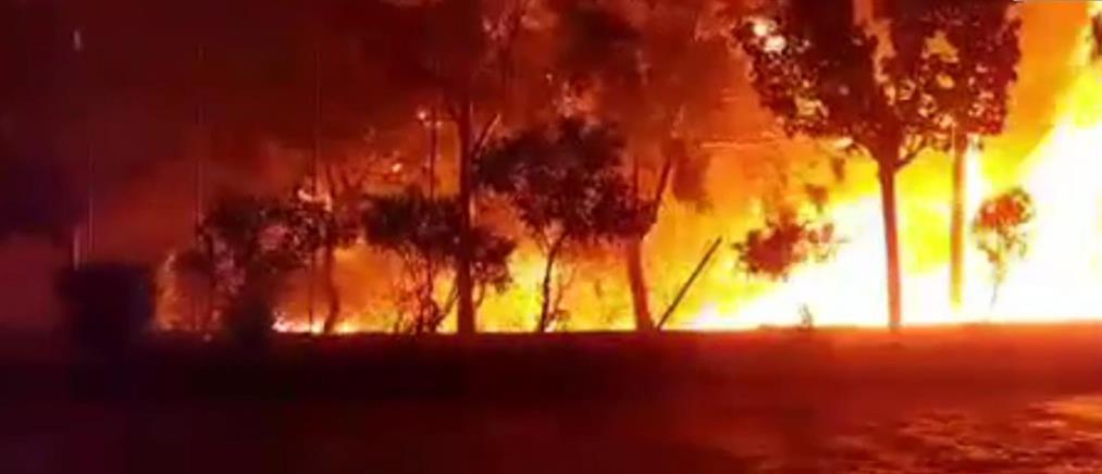 Φωτιά στην Ανατολική Μάνη: σε ορεινή και δύσβατη περιοχή το μέτωπο της φωτιάς