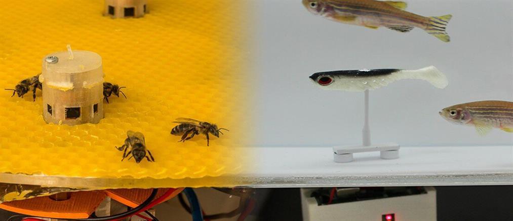 """Μέλισσες και ψάρια """"επικοινώνησαν"""" με τη βοήθεια ρομπότ (βίντεο)"""