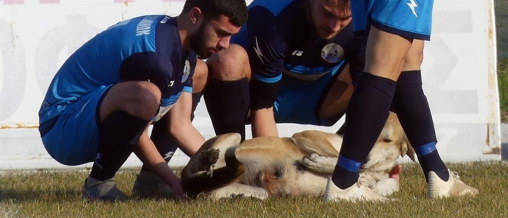 """Διακοπή αγώνα λόγω """"εισβολής"""" σκύλου! (βίντεο)"""