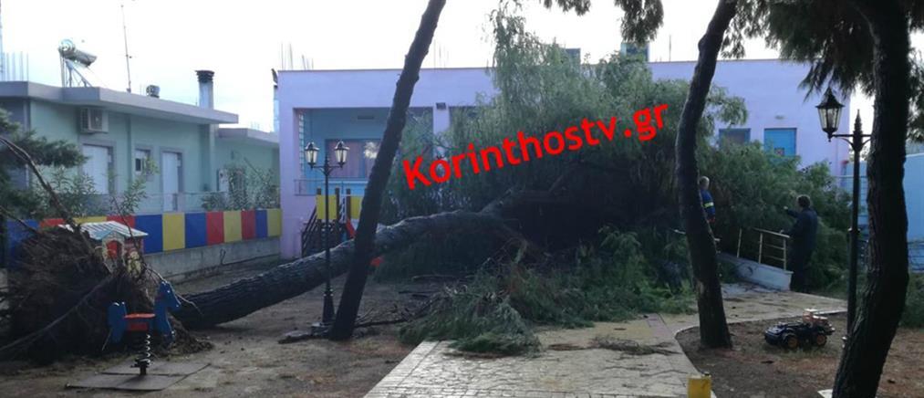 Δέντρο έπεσε στην αυλή νηπιαγωγείου - Από θαύμα γλίτωσαν τα παιδιά (εικόνες)