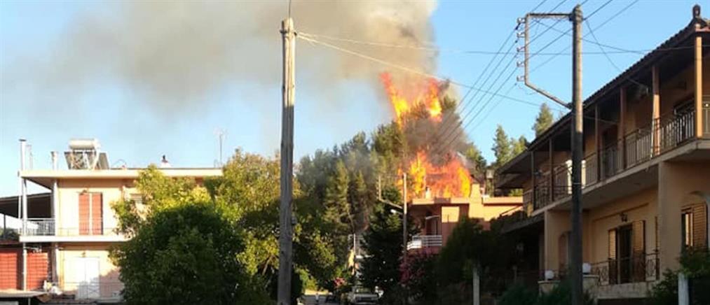 Καλυβάκια: Νέα φωτιά στην Ηλεία (εικόνες)