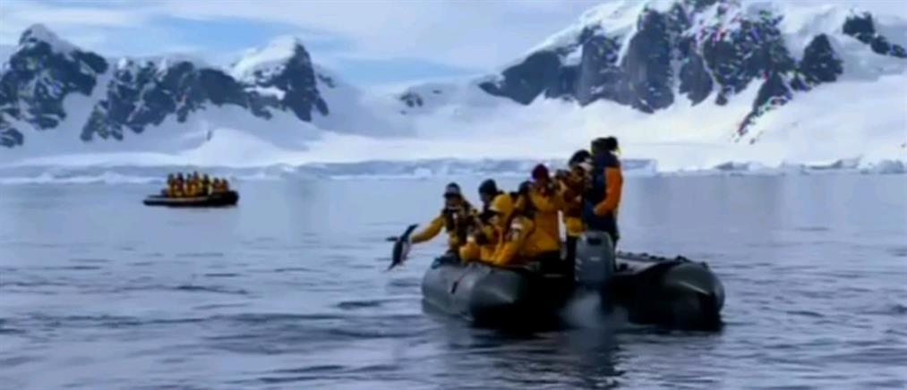 Πιγκουίνος πήδηξε σε βάρκα για να γλιτώσει από φάλαινα (βίντεο)