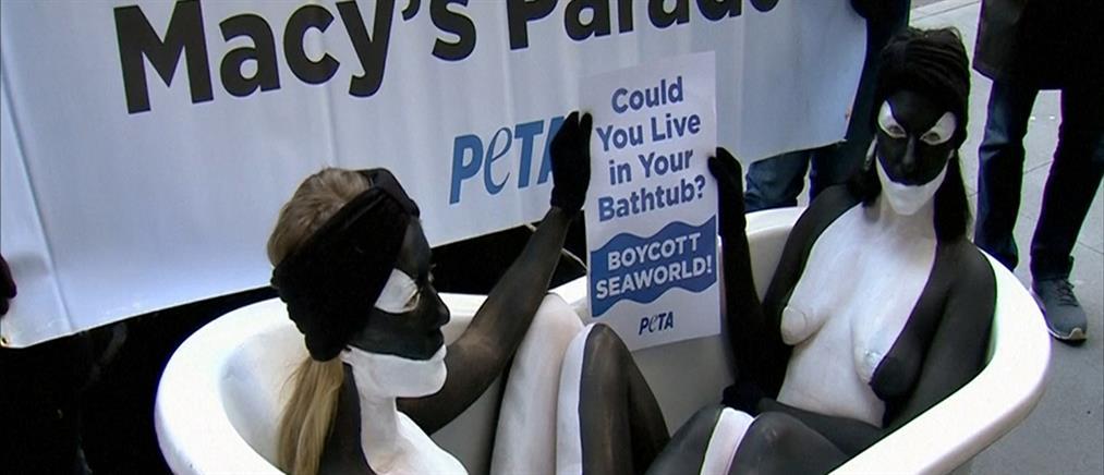 Γυμνές ακτιβίστριες διαμαρτύρονται για τις φάλαινες