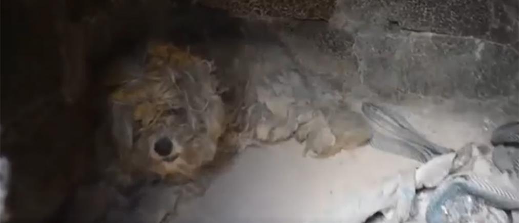 Βρήκαν ζωντανό σκυλάκι σε φούρνο καμμένου σπιτιού στο Μάτι! (βίντεο)