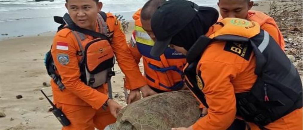Ινδονησία: Καρέ – καρέ η επιχείρηση διάσωσης θαλάσσιων χελώνων μετά το τσουνάμι (βίντεο)