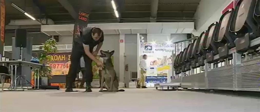 """Έκθεση """"Discover Dogs"""": Εντυπωσίασαν τα λαγωνικά του Λιμενικού (βίντεο)"""