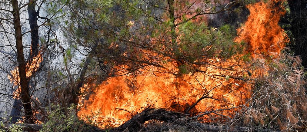 Φωτιά στην Κορινθία: Ενισχύθηκαν οι δυνάμεις της Πυροσβεστικής (εικόνες)