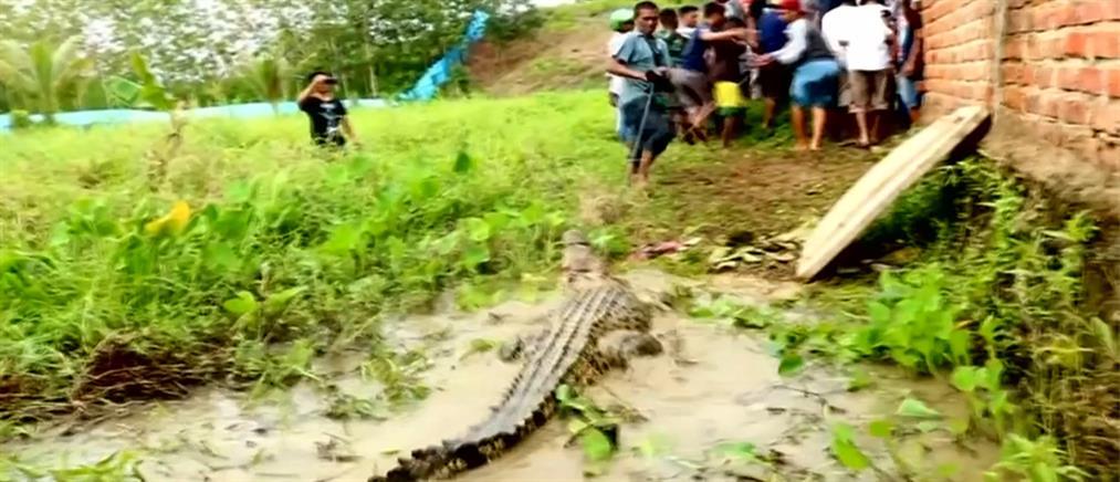 Απίστευτο! Σκότωσαν εκατοντάδες κροκόδειλους για εκδίκηση (βίντεο)